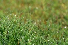 Gocce di rugiada di mattina con le riflessioni dell'arcobaleno sulle lame di erba verdi Fotografie Stock