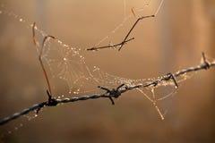 Gocce di rugiada di mattina sul web di ragni Fotografie Stock Libere da Diritti