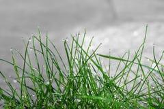 Gocce di rugiada di mattina sulle lame di erba verdi fotografia stock