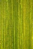 Gocce di rugiada sopra una foglia verde I Immagini Stock