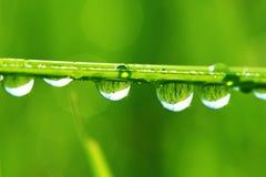 Gocce di rugiada su un'erba Fotografia Stock