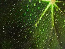Gocce di rugiada su una fine verde della foglia su Immagini Stock