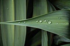 Gocce di rugiada su una foglia della pianta verde Fotografia Stock