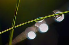 Gocce di rugiada sui gambi dell'erba Fotografia Stock Libera da Diritti