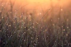 Gocce di rugiada sull'erba all'alba immagine stock