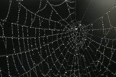 Gocce di Web fotografie stock