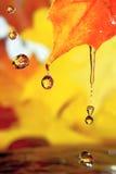 Gocce dorate Fotografie Stock Libere da Diritti
