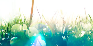 Gocce dovute ed arcobaleni Fotografie Stock Libere da Diritti