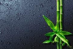 Gocce e bambù sul nero immagini stock libere da diritti