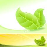 Gocce fresche astratte dei fogli e di rugiada di verde - vettore Fotografia Stock