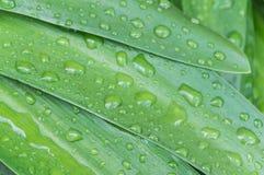 Gocce fresche della pioggia immagine stock