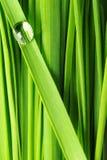 Gocce su un'erba Fotografia Stock Libera da Diritti