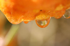 Gocce sull'arancio Fotografia Stock Libera da Diritti