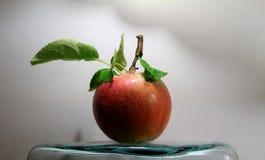 Gocce sulla mela succosa con le foglie sullo studio del gambo Fotografia Stock Libera da Diritti