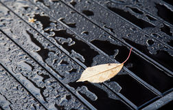Gocce sulla tavola dopo la pioggia con una foglia Fotografia Stock Libera da Diritti