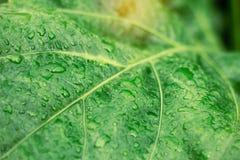 Gocce sulle foglie Fotografia Stock