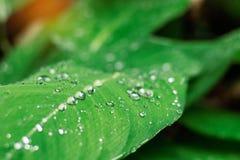 Gocce sulle foglie con la freschezza Fotografie Stock Libere da Diritti