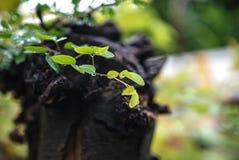 Gocce sulle foglie dopo pioggia con il backgro verde fresco del bokeh della natura Immagine Stock