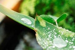 Gocce sulle foglie nella stagione delle pioggie Immagine Stock