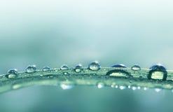 Gocce trasparenti della rugiada dell'acqua sulla fine dell'erba su immagini stock