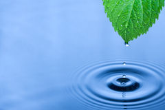 Gocce verdi dell'acqua del foglio Immagine Stock