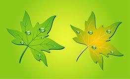 Gocce verdi dell'acqua e del foglio Immagini Stock Libere da Diritti