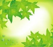 Gocce verdi dell'acqua e del foglio Fotografia Stock