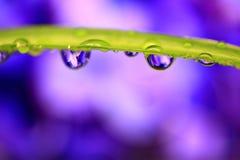 Gocce viola dell'acqua Fotografia Stock Libera da Diritti