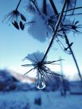 Goccia congelata dell'acqua fotografia stock libera da diritti