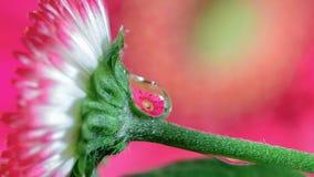 Goccia del fiore Fotografia Stock Libera da Diritti