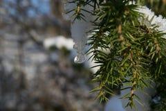 Goccia del ghiaccio sul ramo Immagini Stock Libere da Diritti