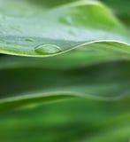 Goccia dell'acqua fotografie stock
