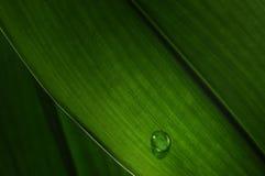Goccia dell'acqua su un foglio verde Immagine Stock