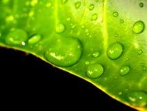 Goccia dell'acqua sul foglio    fotografie stock libere da diritti