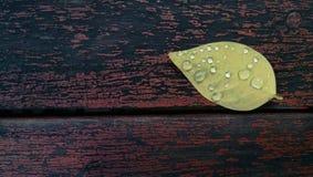 Goccia dell'acqua sul foglio Fotografie Stock