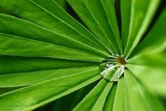 Goccia dell'acqua sulla pianta verde Fotografia Stock