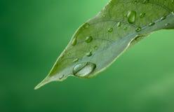 Goccia della pioggia Fotografia Stock Libera da Diritti
