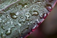 Goccia di acqua della pioggia sulla foglia Fotografia Stock Libera da Diritti