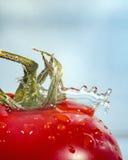 Goccia di acqua e del pomodoro Fotografia Stock Libera da Diritti