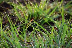 Goccia di acqua su erba fresca nella mattina Immagini Stock Libere da Diritti