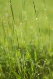 Goccia di acqua su erba verde Immagini Stock Libere da Diritti