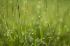 Goccia di acqua su erba verde Fotografia Stock