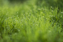 Goccia di acqua su erba verde Fotografie Stock