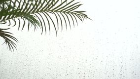 Goccia di acqua su una foglia dopo la pioggia, le foglie della primavera e le gocce della pioggia stock footage