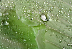 Goccia di acqua sul foglio Fotografia Stock
