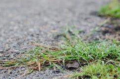 Goccia di acqua sulla foglia dell'erba Fotografia Stock