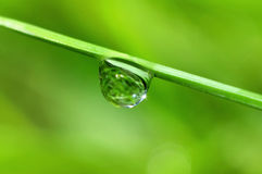 Goccia di pioggia Fotografie Stock