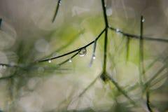Goccia di pioggia del primo piano nell'erba Fotografie Stock Libere da Diritti