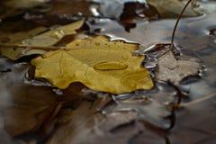 Goccia di pioggia del primo piano sulle foglie Fotografia Stock Libera da Diritti