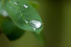 Goccia di pioggia a macroistruzione sul foglio immagine stock